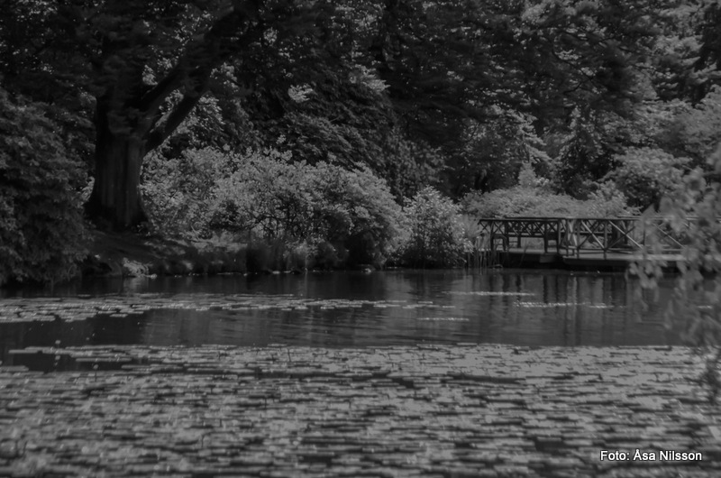 If Monet did Blackandwhite...